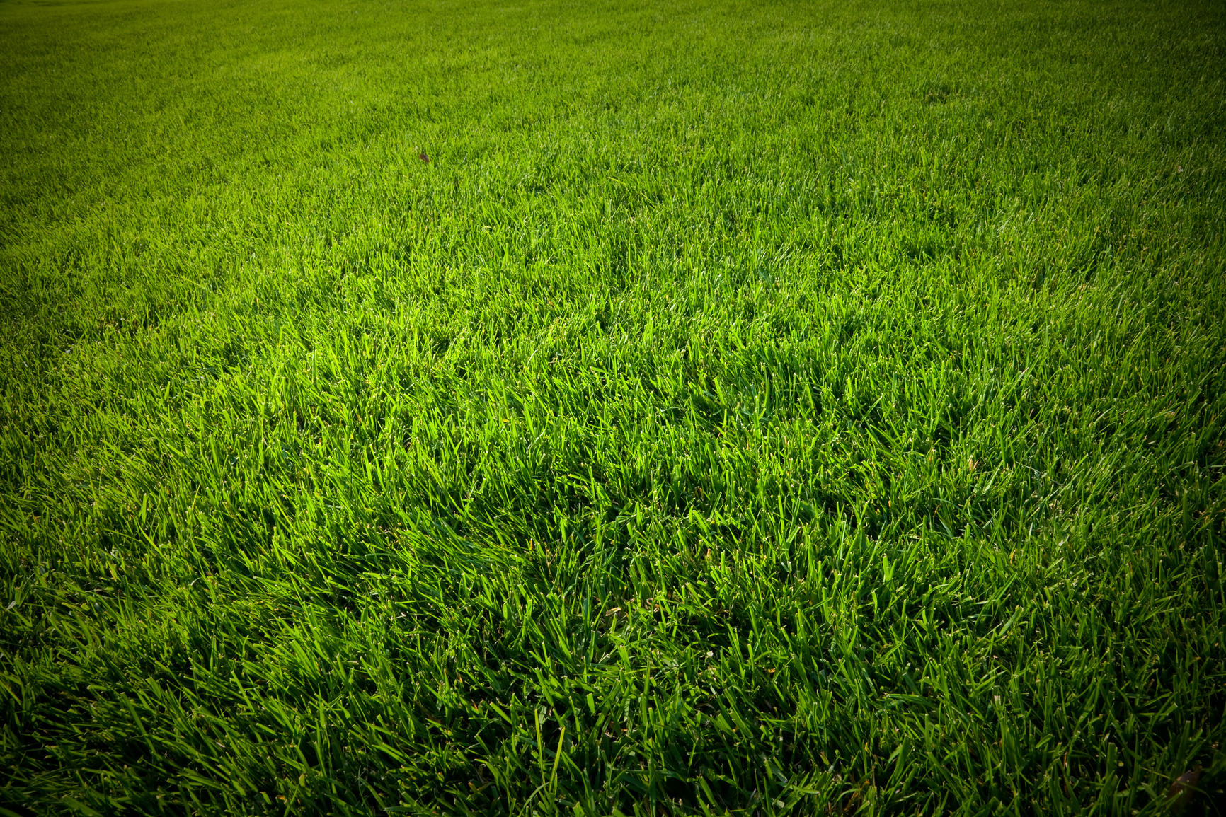 grass_bg